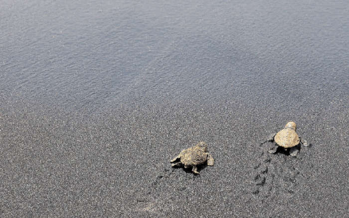 Cape Verde, Turtles