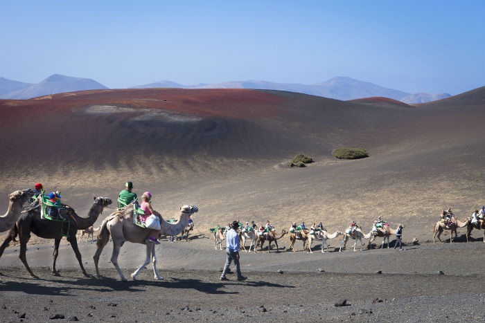 Camel Riding At Timanfaya Park
