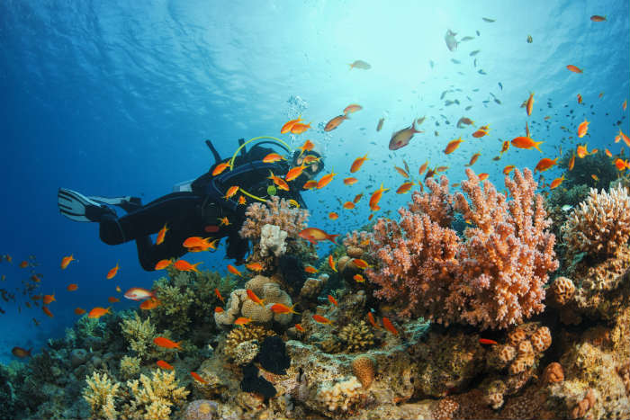 Snorkeling by coral reefs