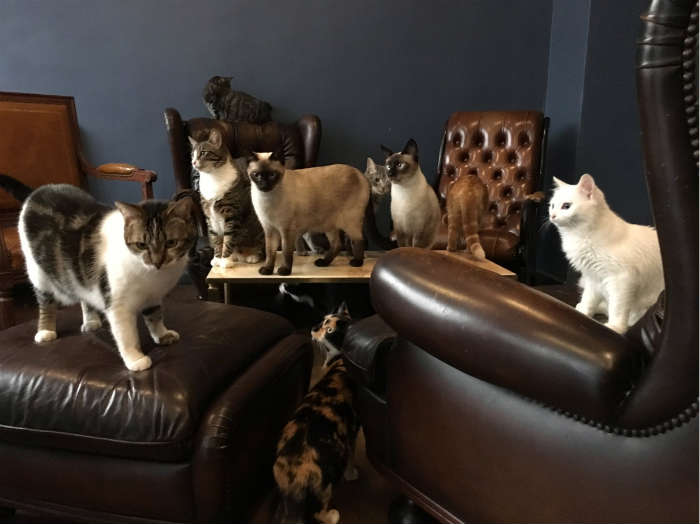 Les Cafe des Chats Paris