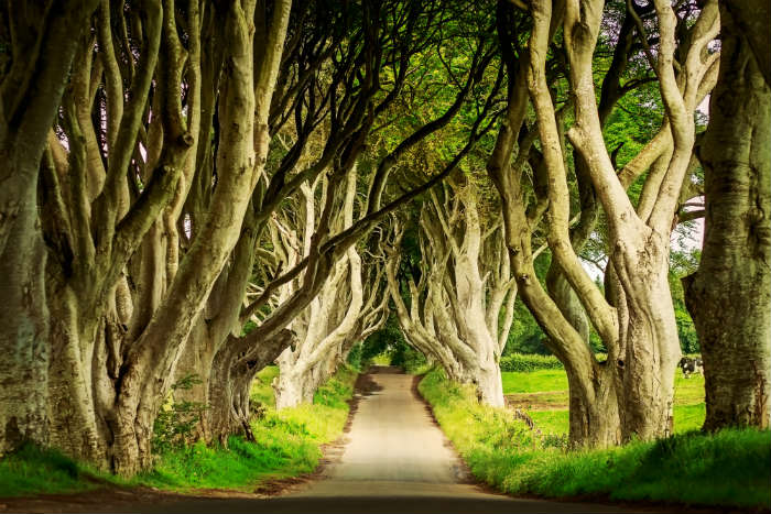 around-the-world-in-80-pictures-dark-hedges-northern-ireland
