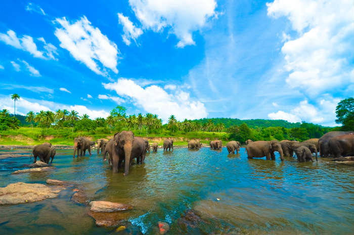 around-the-world-in-80-pictures-elephants-sri-lanka