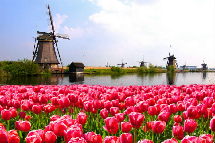 around-the-world-in-80-pictures-windmill-and-tulips-the-netherlands