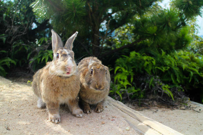 Best islands for animal lovers - Okunoshima