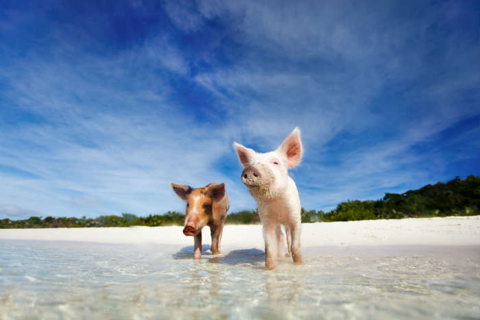 Best islands for animal lovers - Bahamas