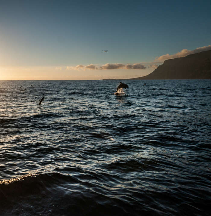 Dolphins jumping in the ocean in Tenerife
