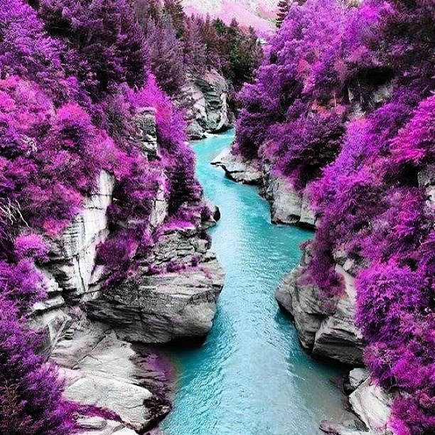 Purple trees and fairy pools in Scotland