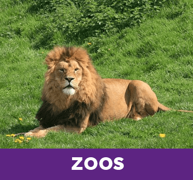 The Best Zoos in Europe